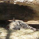 Hyena by Snowkitten