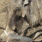 Warthog by Snowkitten