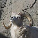 Ram by Snowkitten