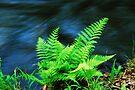 Fern by the Creek by Tori Snow