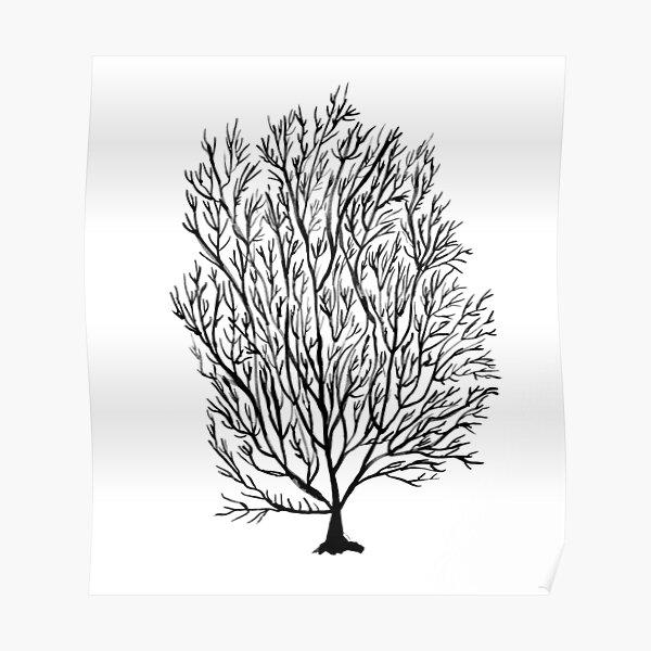 Coral seaweed, black white Poster