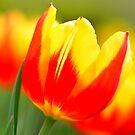 Spring Stripes by Nancy Barrett