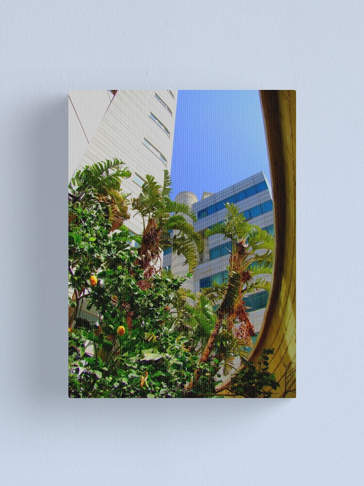 Alternate view of the lemons of the garden of the Crystal Hotel Canvas Print