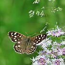 Speckled Wood UK Butterfly - Nature and Wildlife Original photo graphic design Merchandise by VIDDAtees