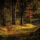 Light in the forest..... by Adri  Padmos