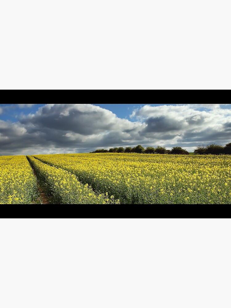 Rape field by tontoshorse