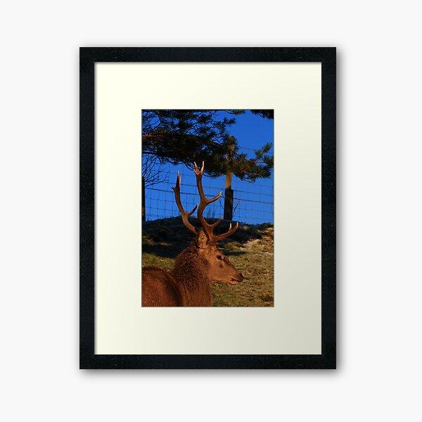 #Dick_Turnip Framed Art Print