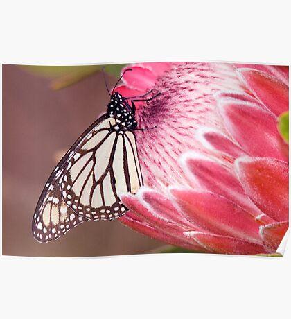 Butterfly Beauty. Poster