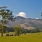 Victoria's best farmland, Mt Worth. Gippsland by johnrf