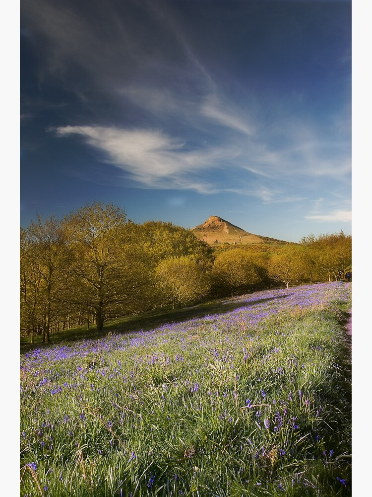 The Bluebells at Roseberry Topping by tontoshorse