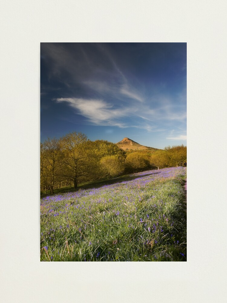 Alternate view of The Bluebells at Roseberry Topping Photographic Print