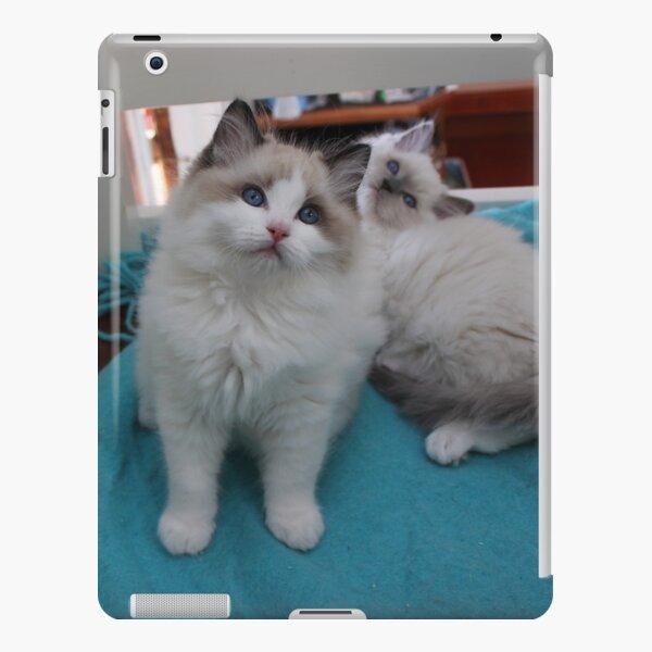 Ragdoll kitten iPad Snap Case