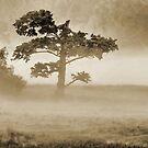 Morning Mist Before Sunrise by jules572