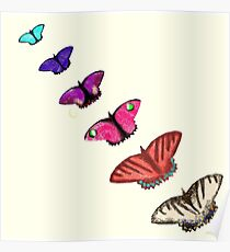 Butterfly stencils  Poster