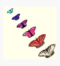 Butterfly stencils  Photographic Print