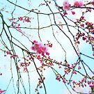 Japanese Blossom by Stephanie Hillson