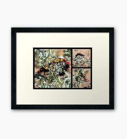 Iron-Cross Blister Beetle ~ Collage Framed Print