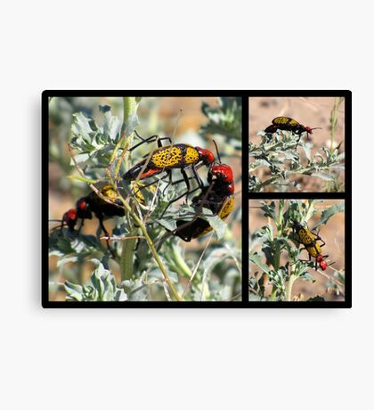 Iron-Cross Blister Beetle ~ Collage Canvas Print