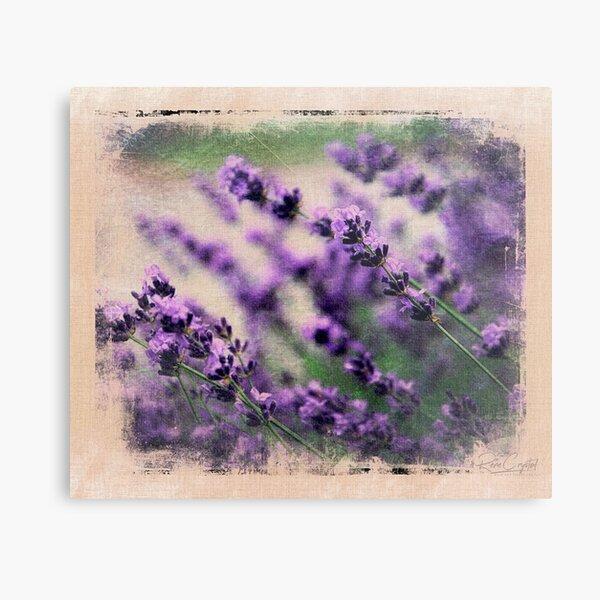 A Lavender Spring Metal Print