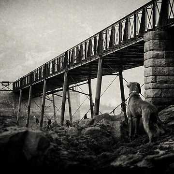 The Lookout by boxerportraits