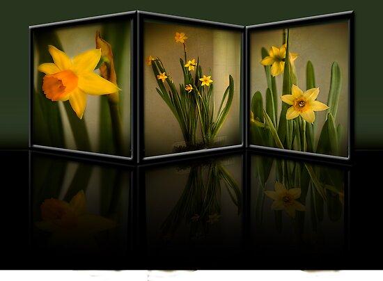 Winter Daffodils  by SandraRos