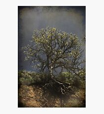 A Strong Hold Photographic Print