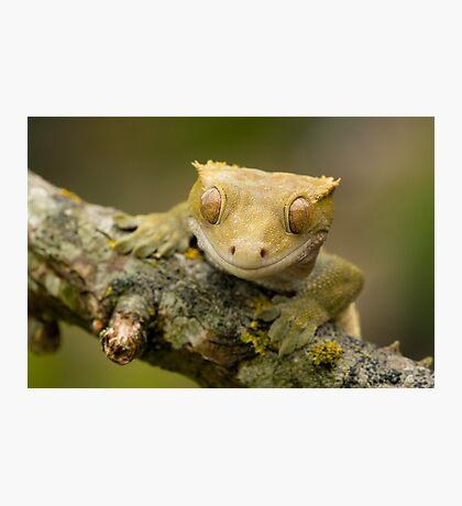 The happy gecko Photographic Print