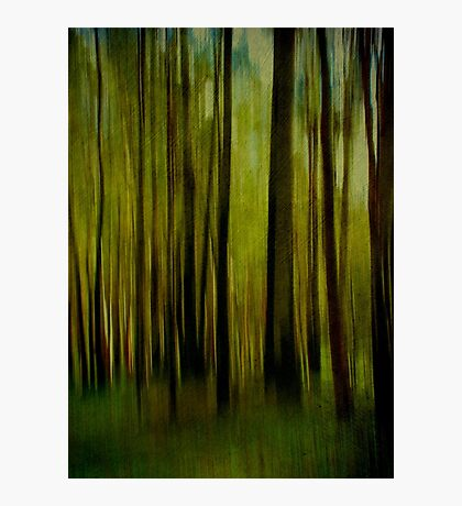 Night falls on the Forest Photographic Print