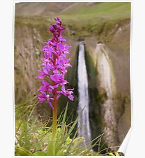 Devon: The Orchid and the Waterfall Poster