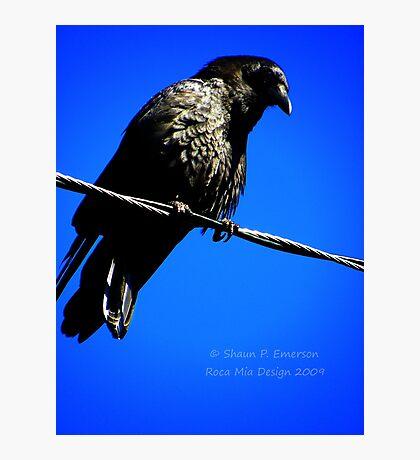 Nevermore Photographic Print