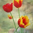 Tulips by Louise  Bishop
