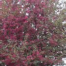 Flowering crab tree by James Gibbs