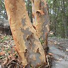 """""""Spotted Gum"""" by AliciabyDesign"""
