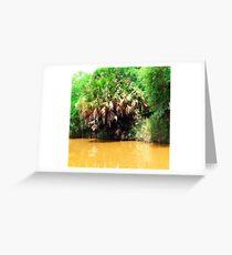 River Palm Greeting Card