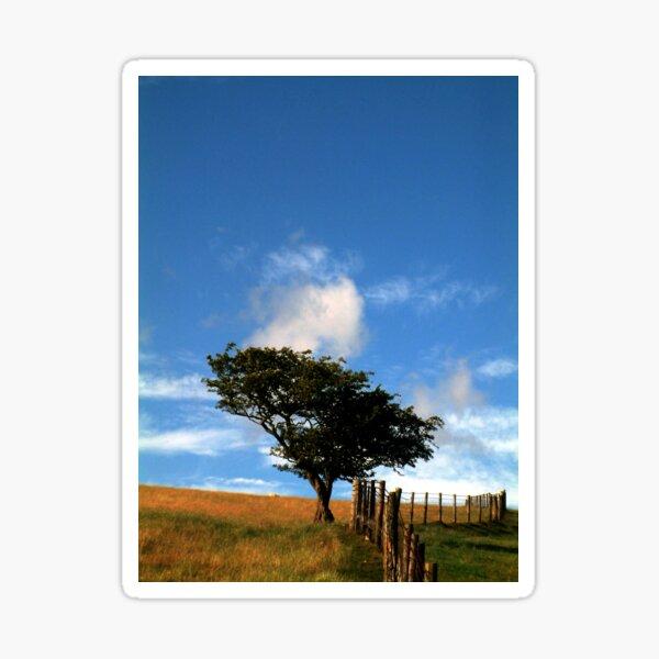 Tree on a Hill Sticker