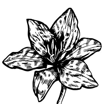 Flowers icon lily black white drawing by PM-TShirts