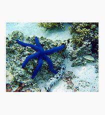 Blue Star Photographic Print