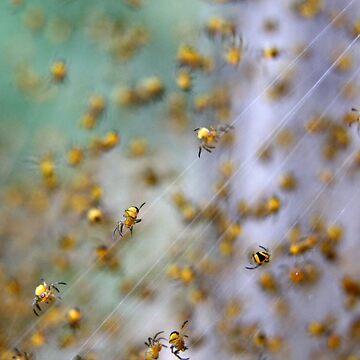 Arachno-nursery 1 by dgcphoto