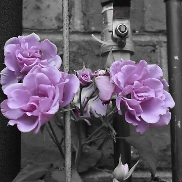 Industrial Roses by ycaporn