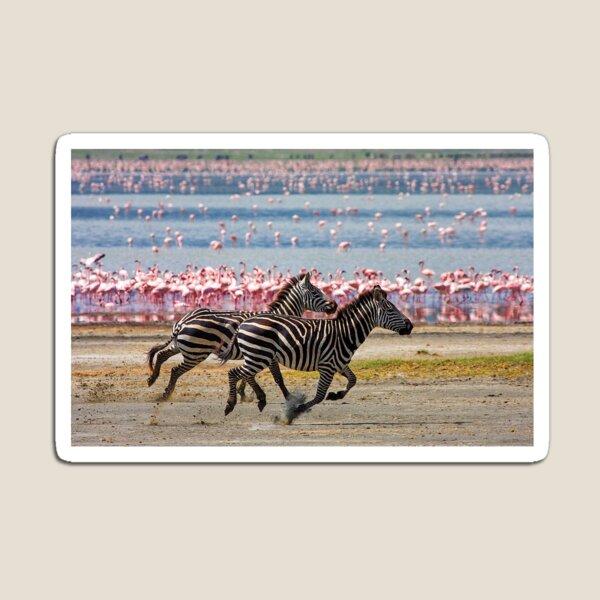Racing Stripes Magnet