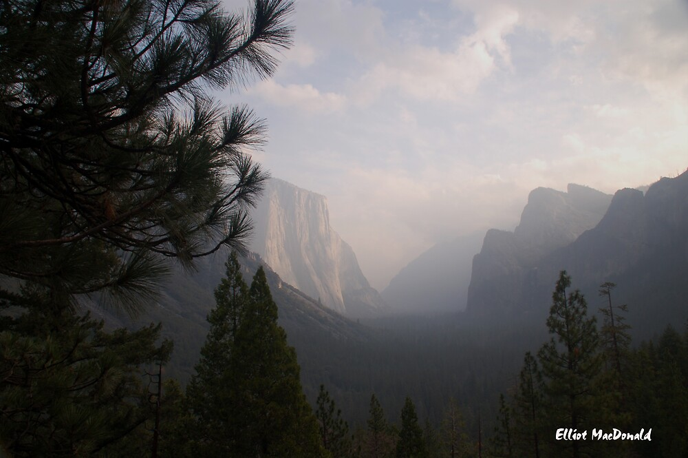 Foggy Morning in Yosemite  by Elliot MacDonald