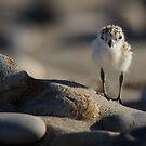 Little Explorer by David Orias