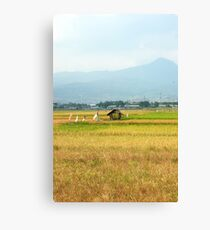 rice paddies Canvas Print