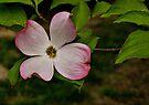 Dogwood Blossom by Sandy Keeton