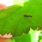 Green beatle. by Livvy Young