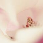 Magnolia by the-novice