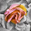 flower by Janis Read-Walters