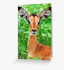 IMPALA BABY, EYES AND EARS! - BLACK-FACED IMPALA _Aepyceros melampus petersi Greeting Card