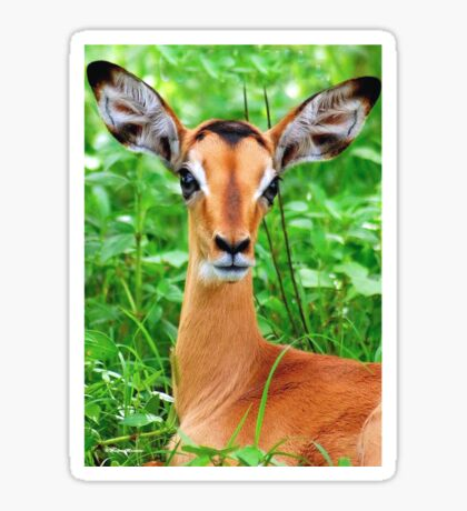 IMPALA BABY, EYES AND EARS! - BLACK-FACED IMPALA _Aepyceros melampus petersi Sticker