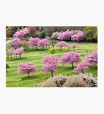 Blossom On The Green Photographic Print
